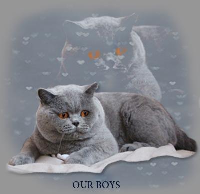ourboys